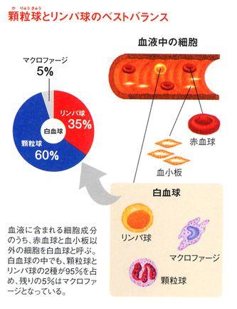 白血球 ストレス